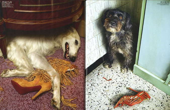 Notes from the Pack - a dog blog. Great photos of dogs chewing shoes, from French Marie Claire in 2009.