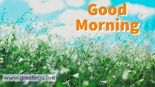 What's app status  good Morning green blue combination