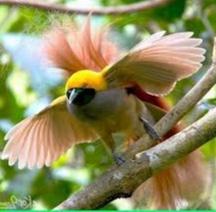 Ciri-ciri Atau Gejala Burung Kicau Yang Sakit