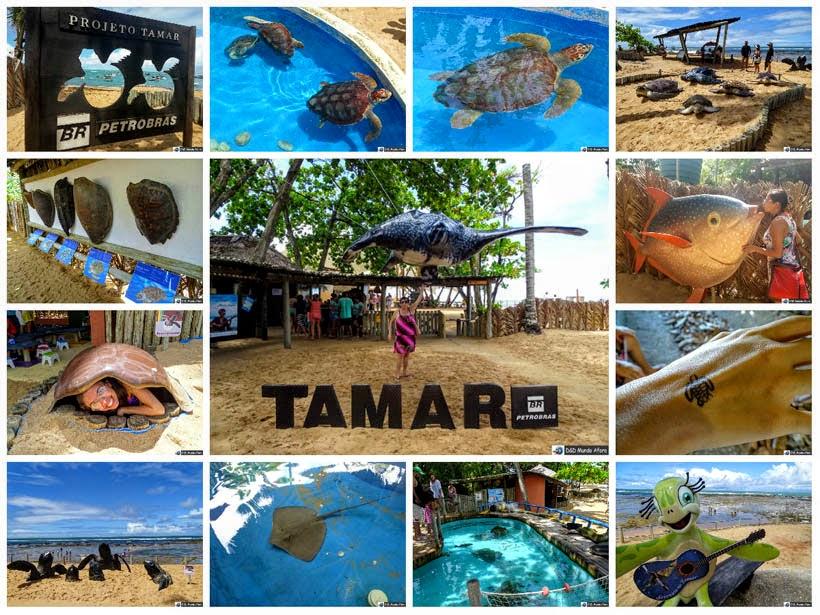 Projeto Tamar, Praia do Forte, Bahia