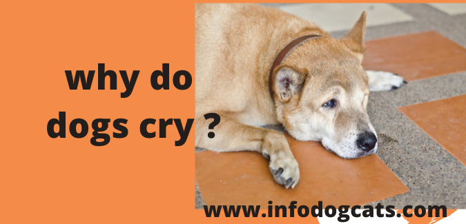 why do dogs cry