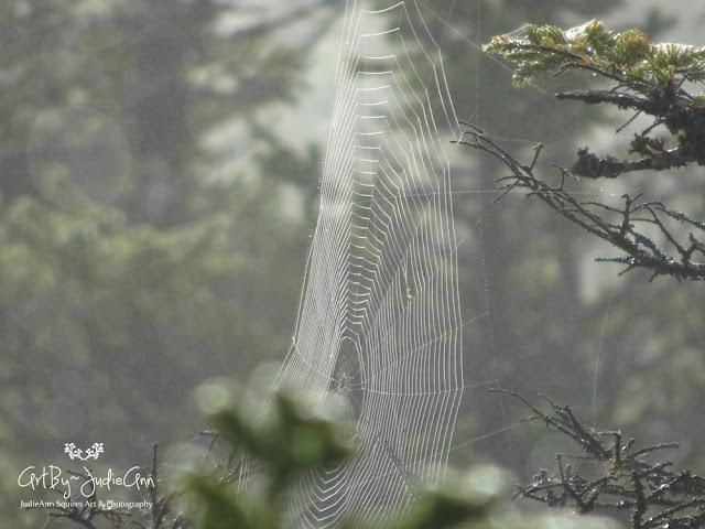 Fog & Web Photo
