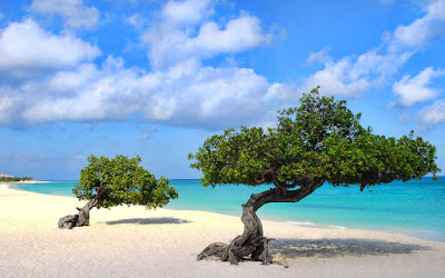 Eagle Beach, Aruba, Caribe