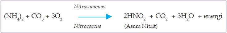 reaksi senyawa amonium karbonat menjadi asam nitrit - kemosintesis