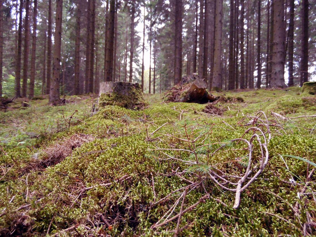 In bosco