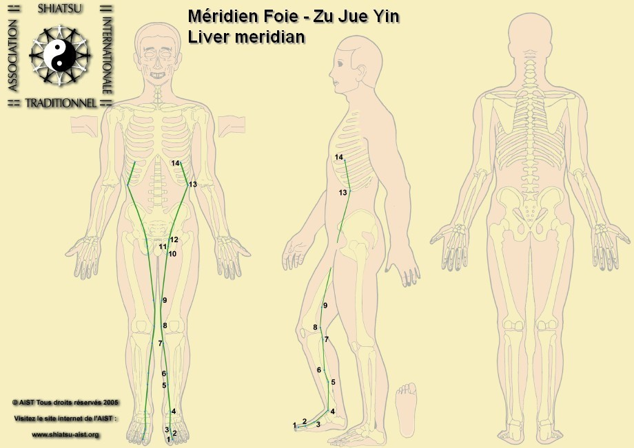 Acupuncture Treatment : Liver Channel - Acupuncture Meridians