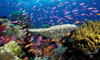 A tropical coral reef off Fiji. (Photograph Credit: Alamy) Click to Enlarge.