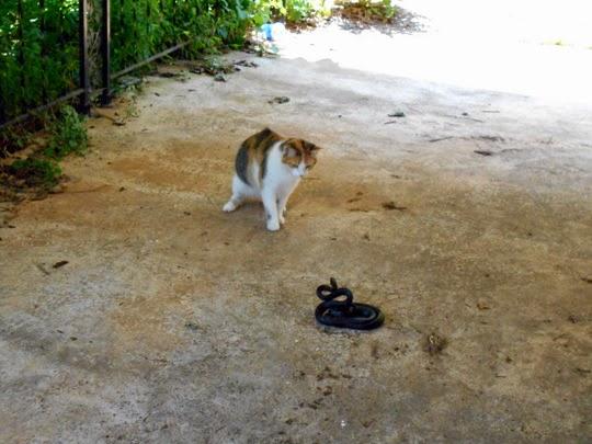 Cat vs Snake