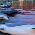 Η θάλασσα βάφτηκε κόκκινη: Σκότωσαν 1.428 δελφίνια «για το έθιμο» στα Νησιά Φερόε