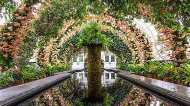 Tour virtual por la Exhibición de Orquídeas del Jardín Bótanico de Nueva York