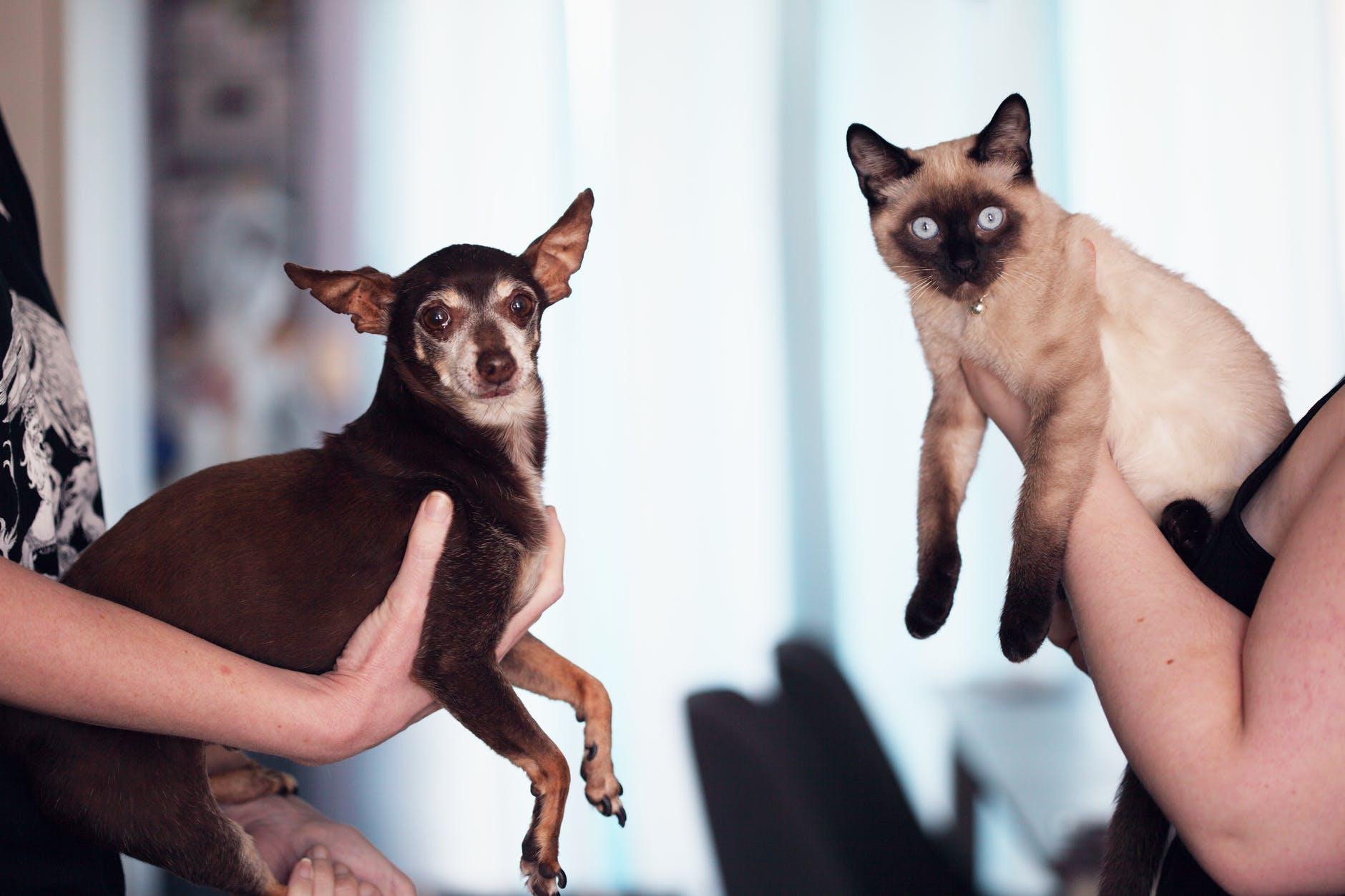 Les chiens et les chats peuvent être amis