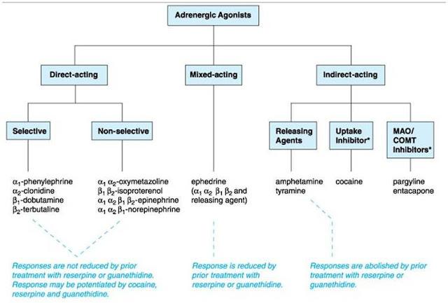 Farmakologi Adrenergik (Simpatomimetik)