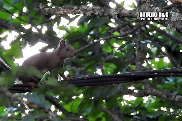 Η φωτογραφία της ημέρας: Ο χαριτωμένος κόκκινος σκίουρος (βίντεο)