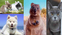 Happiest Animal khusnuma janvar amazing facts MaSaGyani