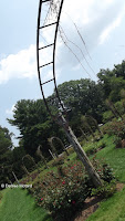 Climbing rose arches - Elizabeth Park, West Hartford, CT