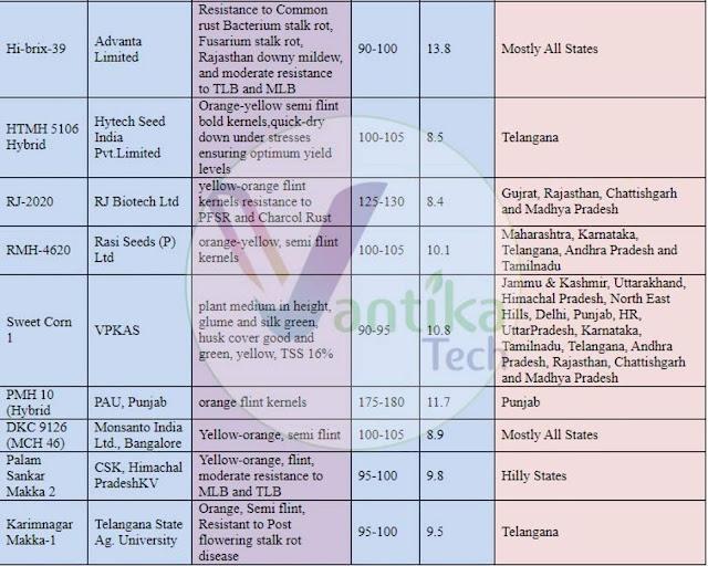 RJ-2020_RMH-4620_Sweet Corn 1_PMH 10 (Hybrid_DKC 9126 (MCH 46)_Palam Sankar Makka 2