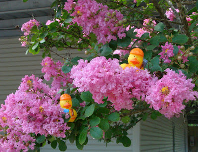 2 duckies in crepe myrtle