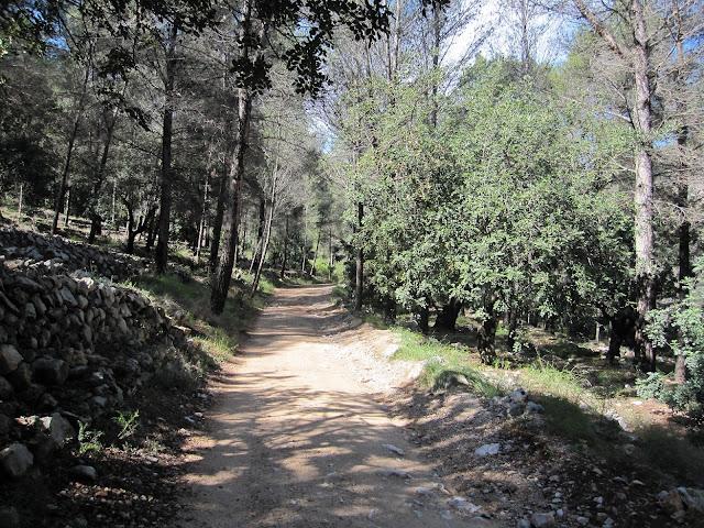 Pista forestal del Racó del Duc