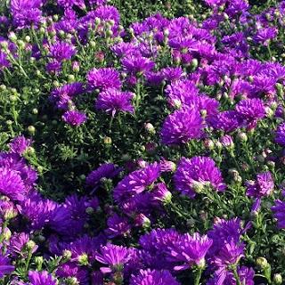 Farbigkeit im Herbst - Pflanzenauswahl