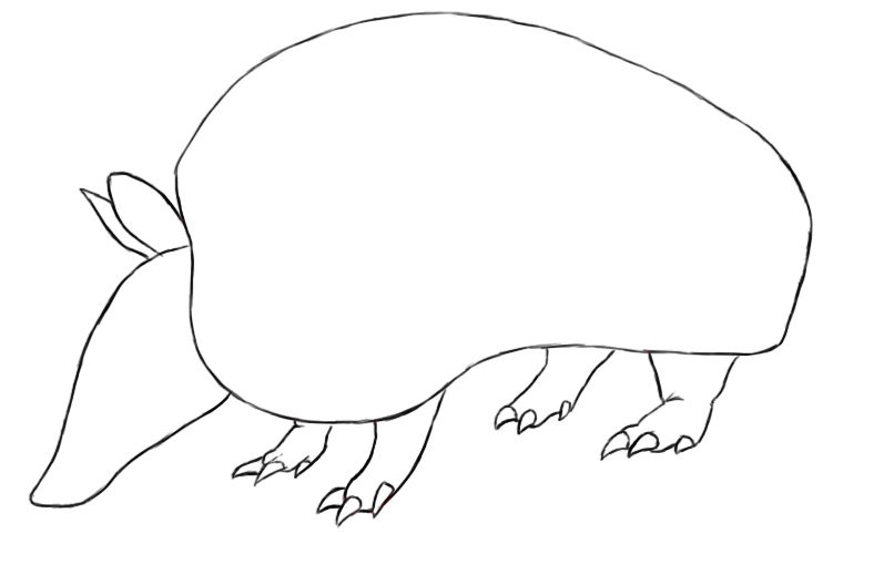 how to draw an armadillo # 12
