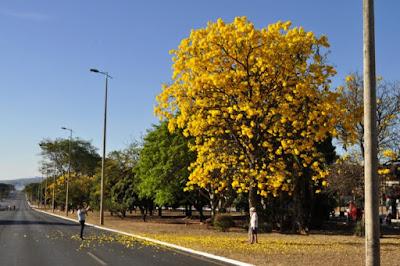 Concurso escolherá árvore simbolo do Piauí