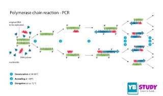 Polymerase chain reaction (PCR) Components, process, Functions
