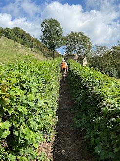 A hedgerow approaching Salmezza
