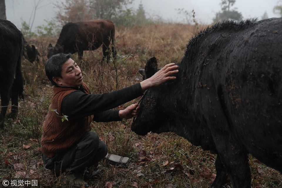 Disabled man makes a living by raising cattle in SW China