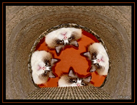 Photoshopped Cat picture • Cats knows that 'Truth lies at the bottom of a well!'