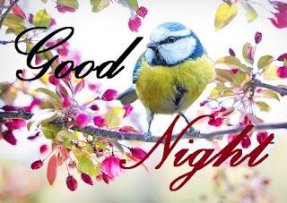 good night flowers and birds