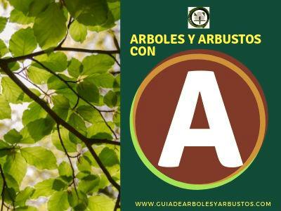 Arboles y arbusto con A, Listado de especies que empiezan con la letra A