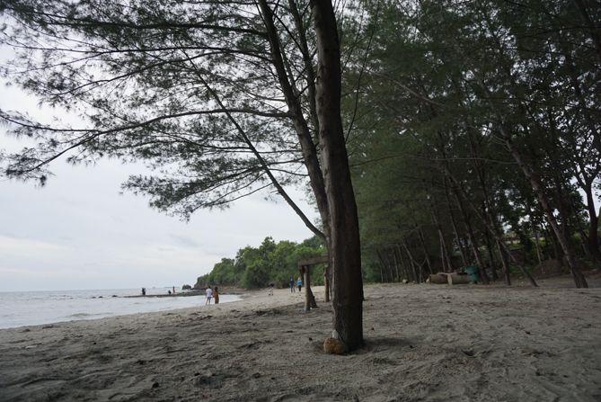 Hamparan pasir dan pohon cemara