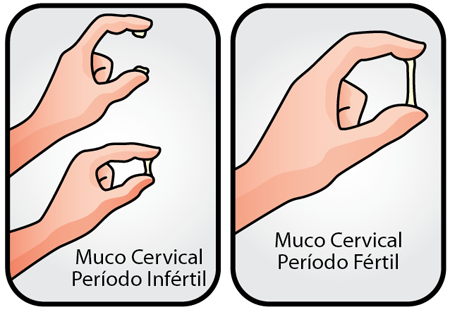 Método Billings ou método do muco cervical