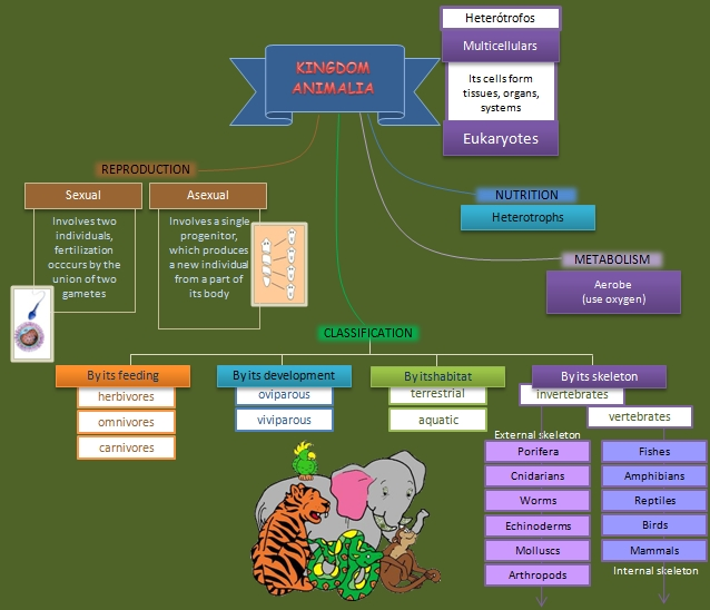 animal kingdom diagram - photo #27