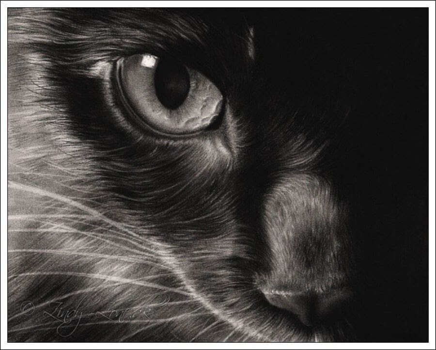 07-Black-Cat-Zindy-Nielsen-Fantasy-Animals-Meet-Realistic-Ones-www-designstack-co
