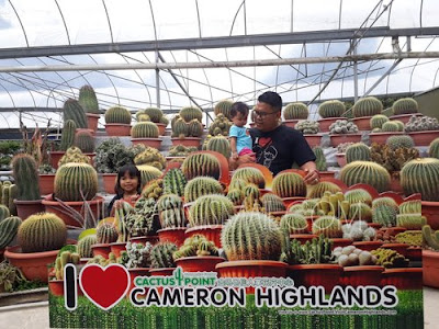 Cuci Mata di Cactus Point Cameron Highland