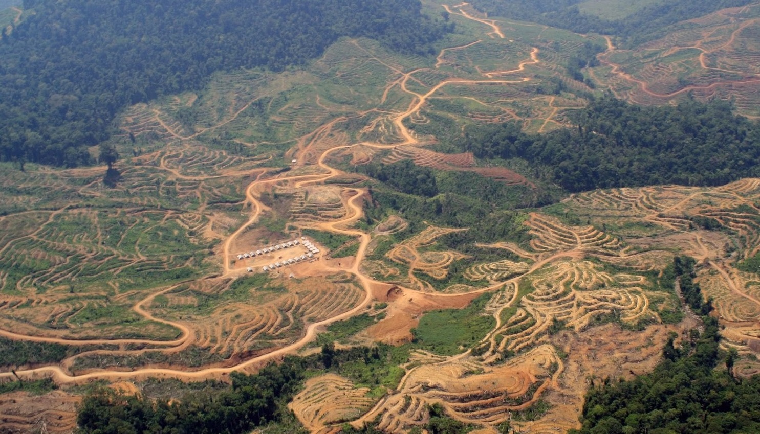KLHK Sebut 91 Persen Hutan yang Lepas Terjadi Sebelum Era Jokowi, Benarkah Begitu?