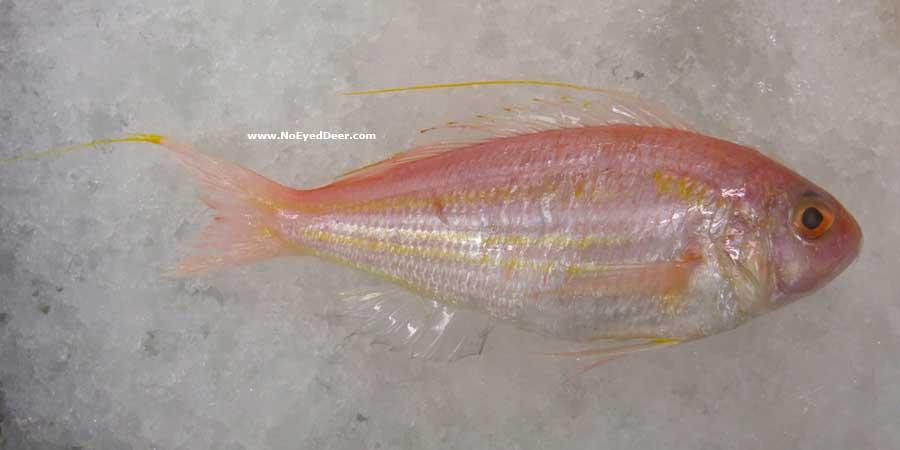 Jenis Jenis Ikan Air Laut Ekonomis Penting Bagian 16 Lalaukan