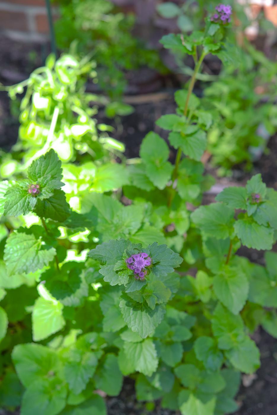 diy cutting garden, cutting garden layout, how to grow a cutting garden