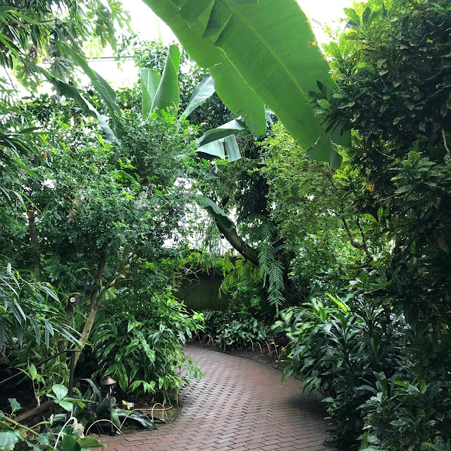 A path through lush tropical greenery at Bolz Conservatory.
