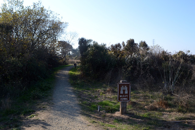 path into the marsh area
