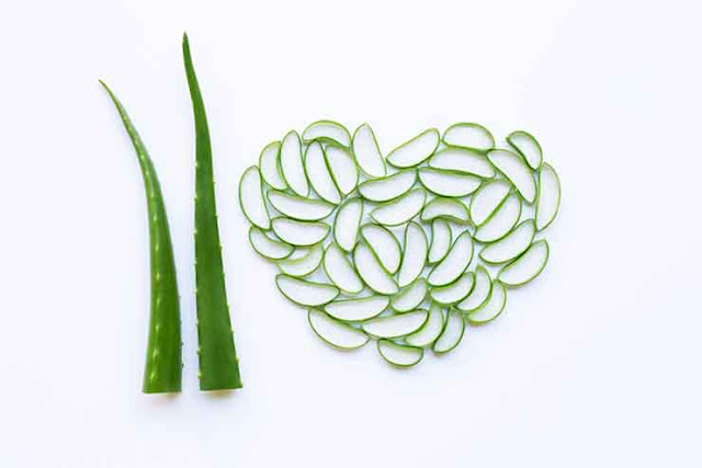 Aloe Vera can promote heart