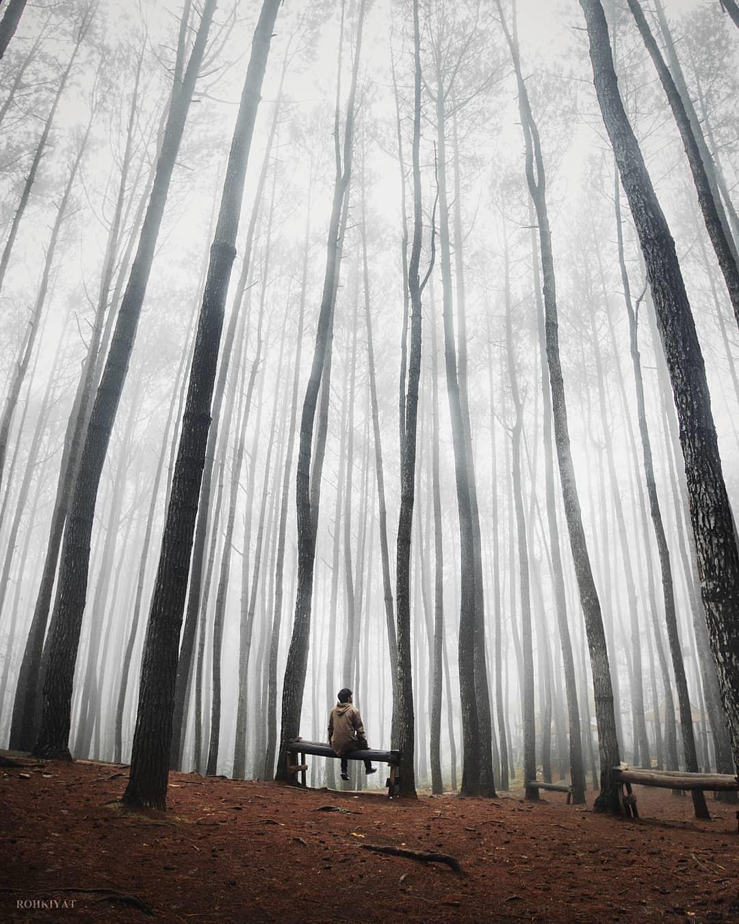 Rute Hutan Pinus Mangunan