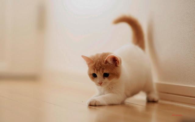 ảnh đẹp mèo con