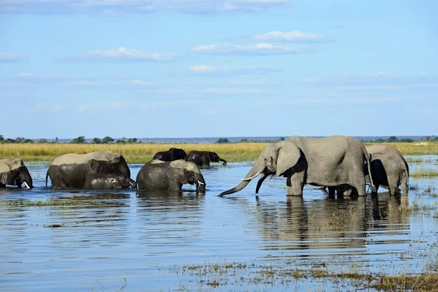 Chobe National Park, Botswana: The Complete Guide