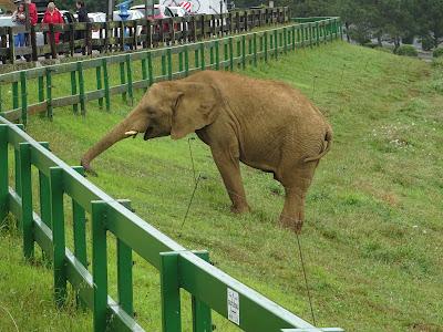 Elefantes, Parque de la Naturaleza de Cabárceno, Santander