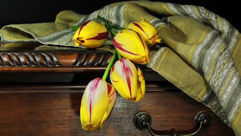 Tulips Flowers HD Wallpaper 2