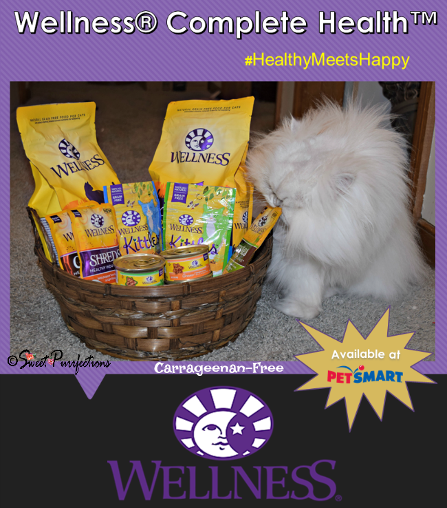 Brulee and the new Complete Health™ Cat Food from Wellness®