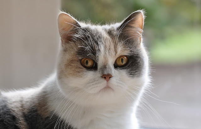Cat Breeds – Taking a Closer Look at Them