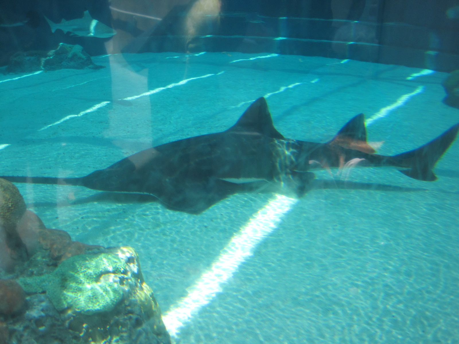 Shark Tank At The Aquarium Of Pacific In Long Beach Ca August 14 2017
